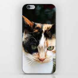 Sweet Cat Portrait iPhone Skin