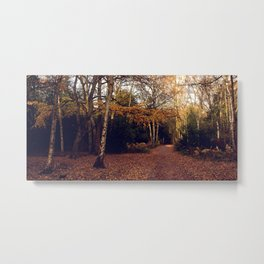 Walk In The Autumn Woods Metal Print