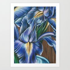 Blue Iris & Wood Study Art Print