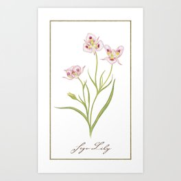 The Wildflower Collection - Sego Lily Art Print
