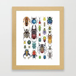 Beetle Collection Framed Art Print