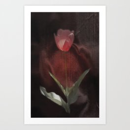 silk tulip Art Print