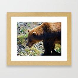 Griz - Wildlife Art Print Framed Art Print