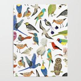 Endangered Birds Around the World Poster