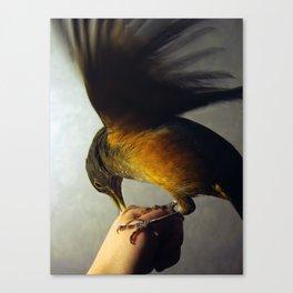 Coralito Canvas Print