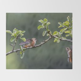 Rufous Hummingbird at Large, No. 2 Throw Blanket