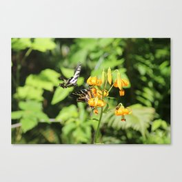 2 butterflies and a bee Canvas Print