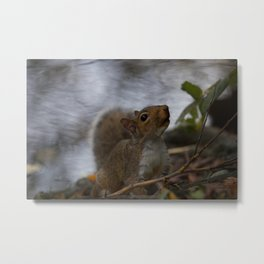 Another Pitville Squirrel Metal Print