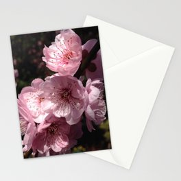 Prunis Blossom Stationery Cards