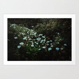 Big Sur I - Twilight Calla Lilies Art Print