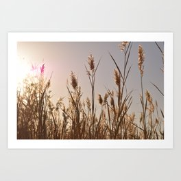 Wetlands Grasses Art Print