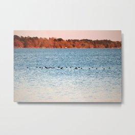 American Coots Crossing Lake Metal Print
