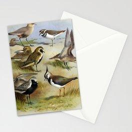 Sociable Plover Golden Plover Grey Plover Lapwing Killdeer Plover Asiatic Golden Plover6 Stationery Cards