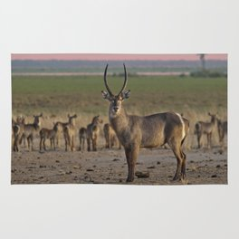 The Waterbuck and his Ladies Rug
