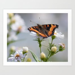 Butterfly By The Channel Art Print