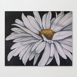 Pollari Shasta Daisy Canvas Print