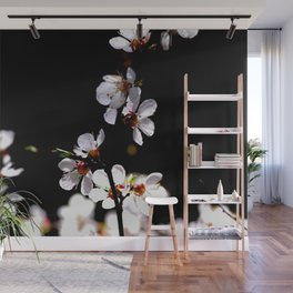 Stunning Japanese Apricot Flowers Against The Black Background Wall Mural