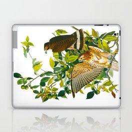 Broad Winged Hawk Laptop & iPad Skin