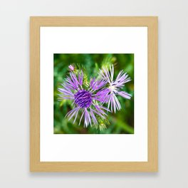 Purple Blossoms of a Thistle Framed Art Print