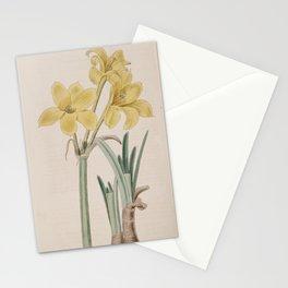 Flower 640 chlidanthus fragrans Perfumed Chlidanthus13 Stationery Cards