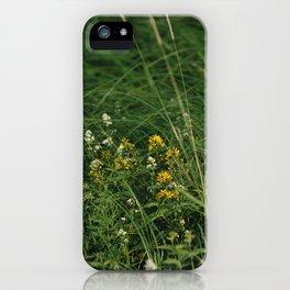St. John's wort flowers iPhone Case