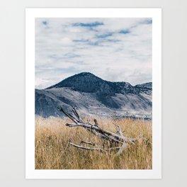 Fallen Timber Art Print