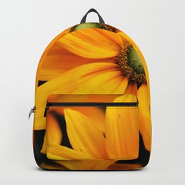 Close up of yellow and orange Daisy flower head in summer Backpack