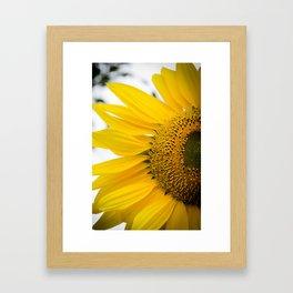 Sunnyflower l Framed Art Print
