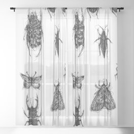 Cacography in Entomology Sheer Curtain