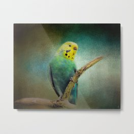 The Budgie Collection - Budgie 1 Metal Print
