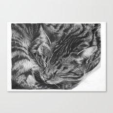 Ziggy the Tabby Cat Canvas Print