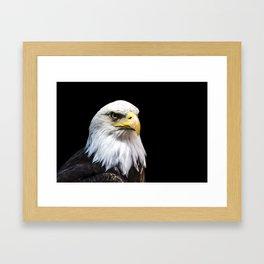 Majestuous Bald Eagle Framed Art Print