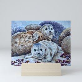 Harbor Seals of Monterey Bay Mini Art Print