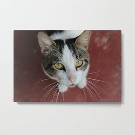 Stray Love Metal Print