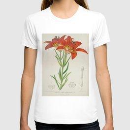 Lilium philadelphicum Vintage Botanical Floral Flower Plant Scientific T-shirt