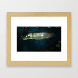acvarium - silver fish Framed Art Print