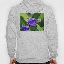 Beautiful Blue Spiderwort Hoody