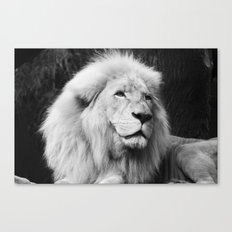 LIONS IN VEGAS Canvas Print