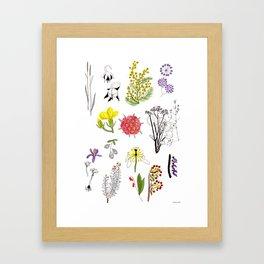 Herbarium #1 Framed Art Print