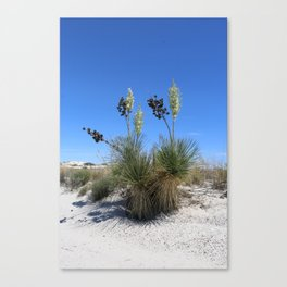 White Sands Dune With Soap Yucca Canvas Print