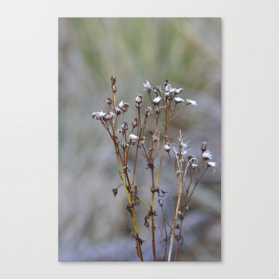 Frosty Seeds Canvas Print