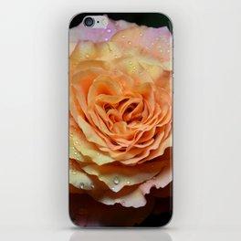Dewdrop Rose iPhone Skin
