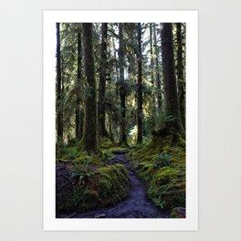 Hoh, Woods Path Art Print