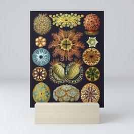 Ernst Haeckel Sea Squirts Ascidiae Black Background Mini Art Print