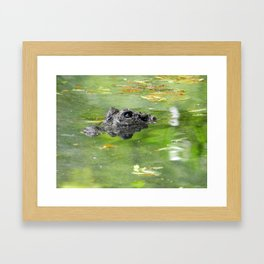 Cautious Caiman Framed Art Print