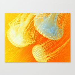 Jellyfish of the Orange Marmalade Hoodie Canvas Print