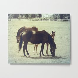 Horses and Foal Baby Animals Metal Print