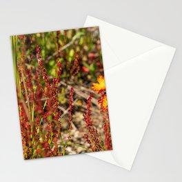 Wild Flower Stationery Cards