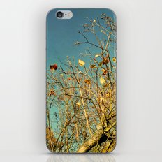 autumn skies iPhone & iPod Skin