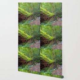 Into the Jungle Wallpaper